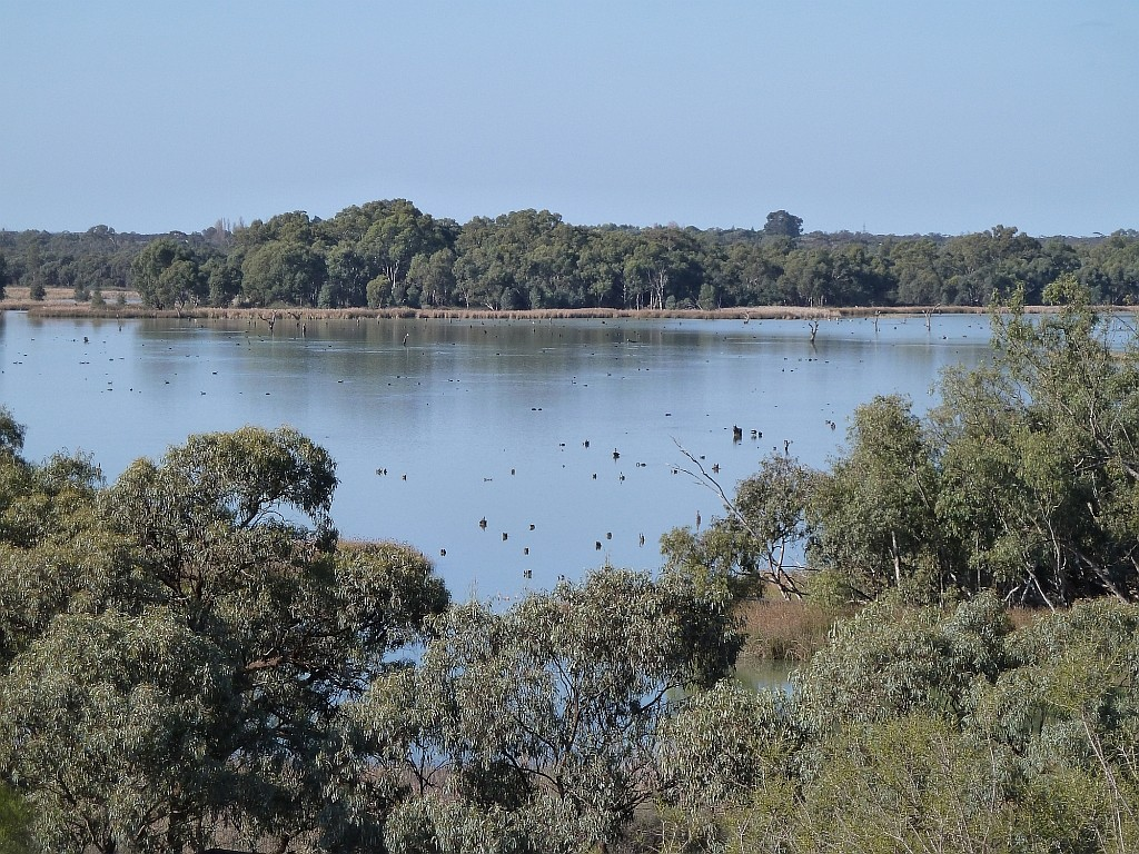 View over King's Billabong on the Murray River, Victoria, Australia. Photo by Tim Ralph.