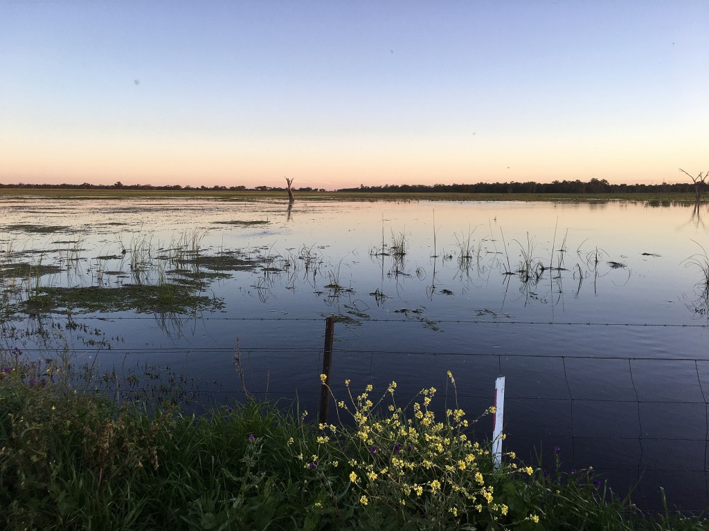 Flooding in the Macquarie Marshes, NSW, Australia.