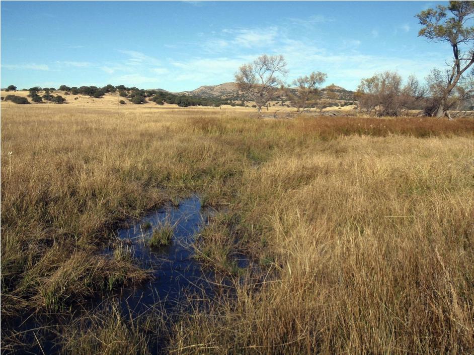 cienaga ground view